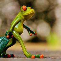 grenouille-voyage