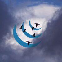 Birds migration over a jQuery logo